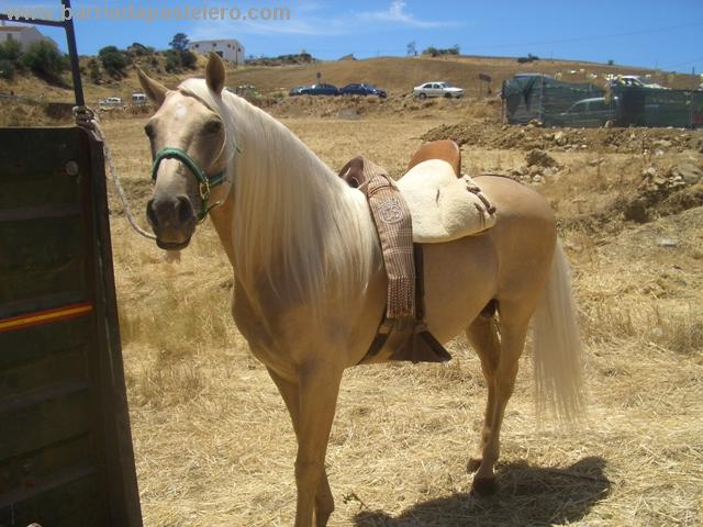 Caballo dorado ganador del concurso de caballos de la Feria de Pastelero de 2007